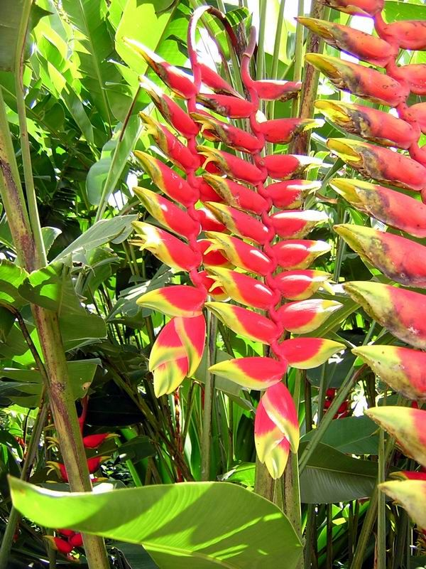 This is one of our favorite plants in our gardens here in