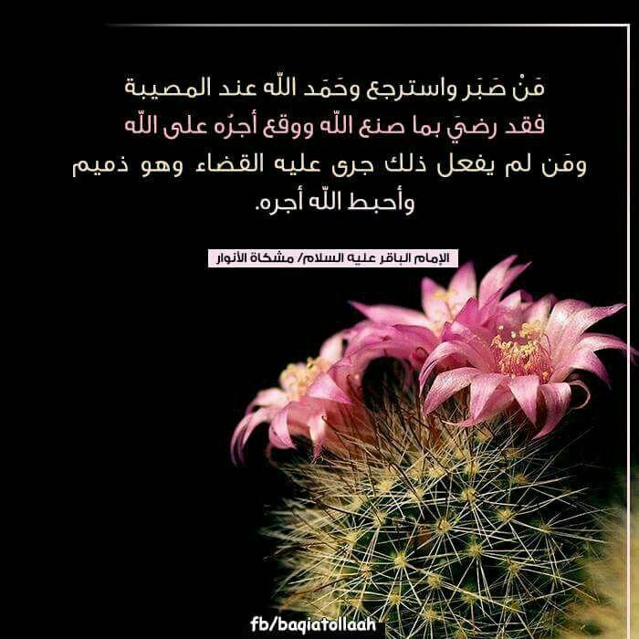 جزاء الصبر Dandelion Flowers Plants
