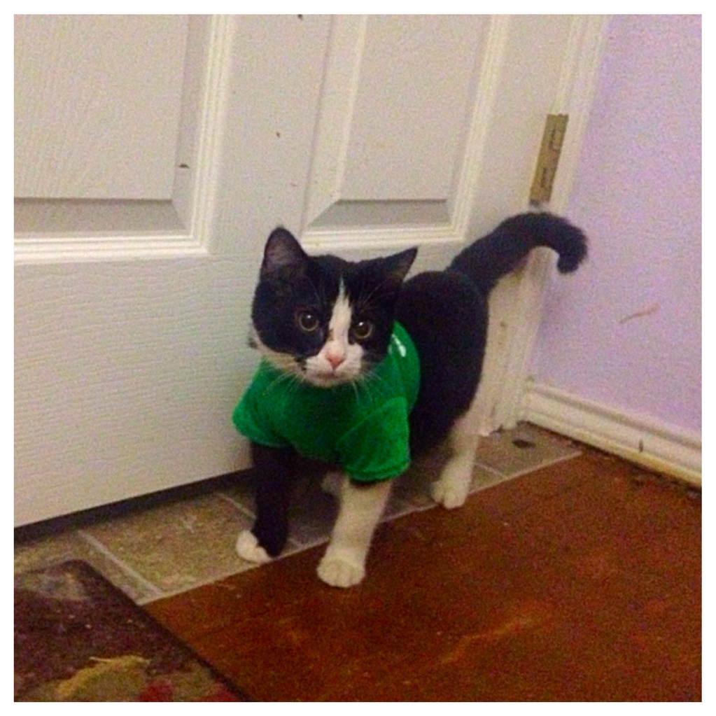 Our little kitten had a big surgery, and now he wears a wee