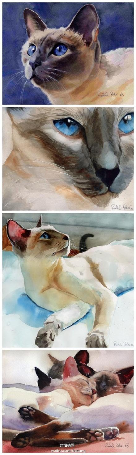 Artist Rachel Parker watercolor studies of a Siamese cat.