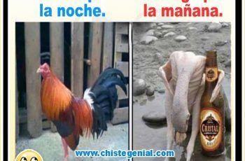 Chistes De Cortos De Borrachos Oracion Del Borracho Funny Pictures Humor Memes