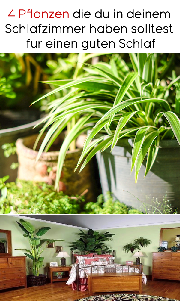 4 Pflanzen die du in deinem Schlafzimmer haben solltest