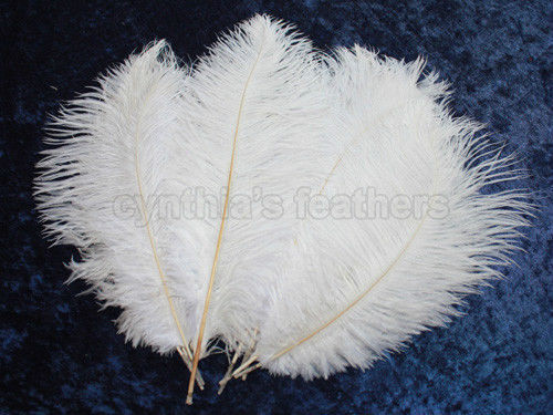 """24.94$  Buy now - http://viwsr.justgood.pw/vig/item.php?t=qzt3oz821248 - 16 Grade A 12-14"""" Snow White Ostrich Drab Plume Feathers Wedding, Millinery, NEW"""