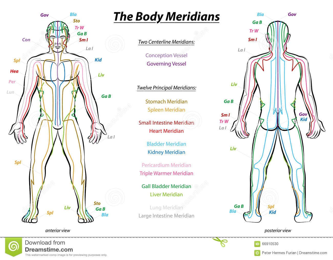 Meridian System Description Chart Male Body - Download From Over 54 ...