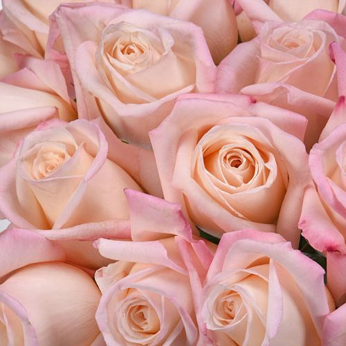 Anna Creamy Light Pink Rose Fiftyflowers Com Light Pink Rose Pastel Pink Aesthetic Blush Wedding Flowers
