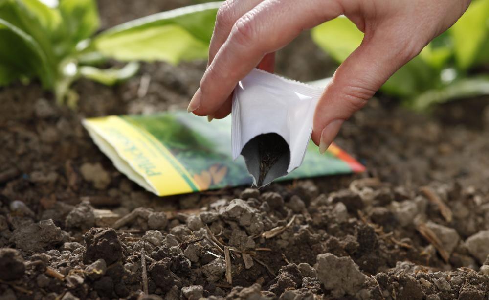 10 Tipps Rund Um Die Aussaat | Garten Gemuse Im Spatsommer Sorten Garten Tipps
