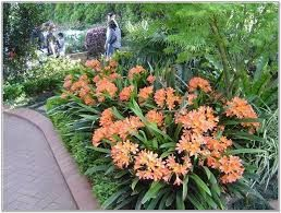 Tropical Garden Ideas Nz shade loving plants nz - google search | nz tropical garden ideas
