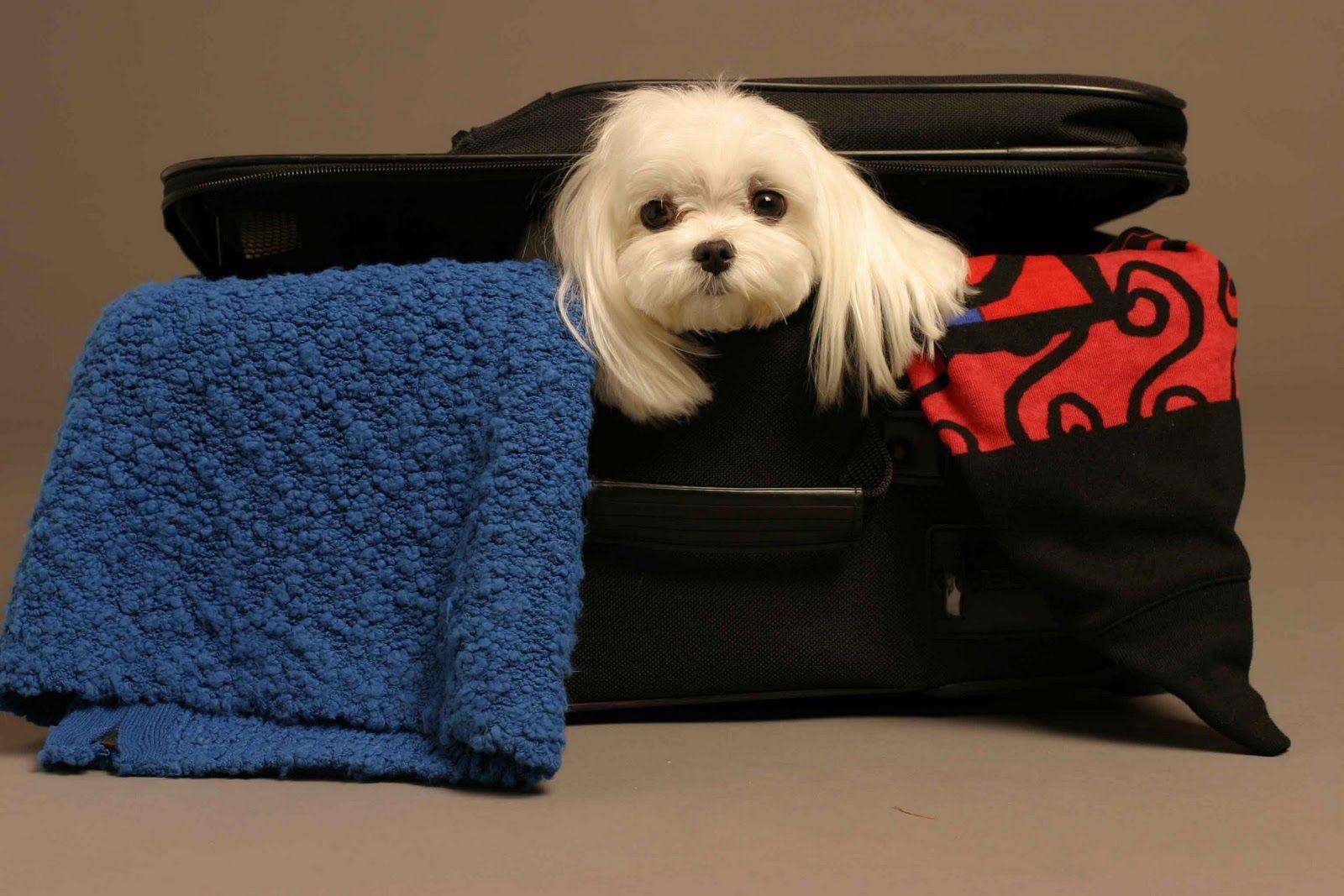Viajar con el perro al extranjero Pet travel, Pet