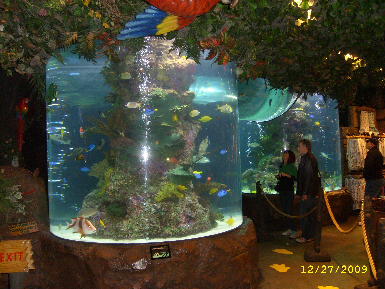 Rainforest Cafe Bar, Las Vegas, Nv - Las Vegas, Nv