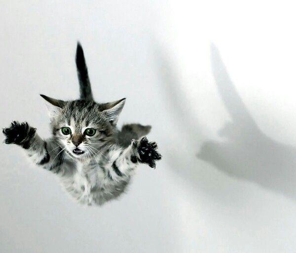 Little Flying Wallenda Kitty - Look, Ma! No net!