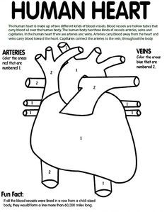 Human Heart Coloring Page Awesome Tells Kids What Part To Color Blue And What Part To Color Red Anatomy Coloring Book Heart Coloring Pages Heart For Kids