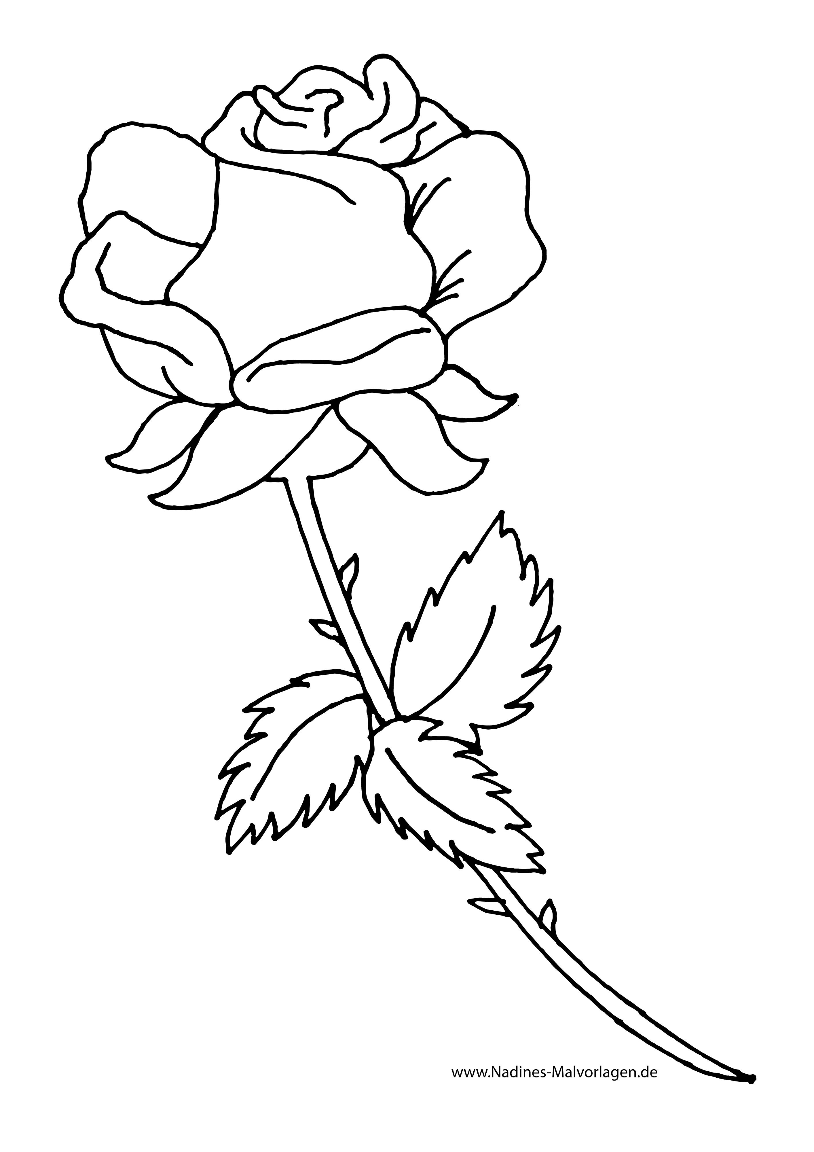 Rose Zum Ausmalen Neu Rote Rose Zum Selbst Ausmalen Nadines Ausmalbilder Ausmalbilder Rosen Zeichnen Ausmalen
