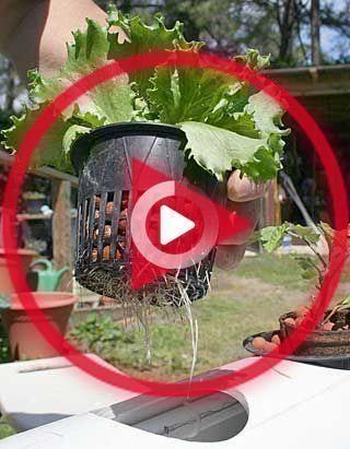 Comment démarrer votre propre jardin hydroponique #hydroponic #garden