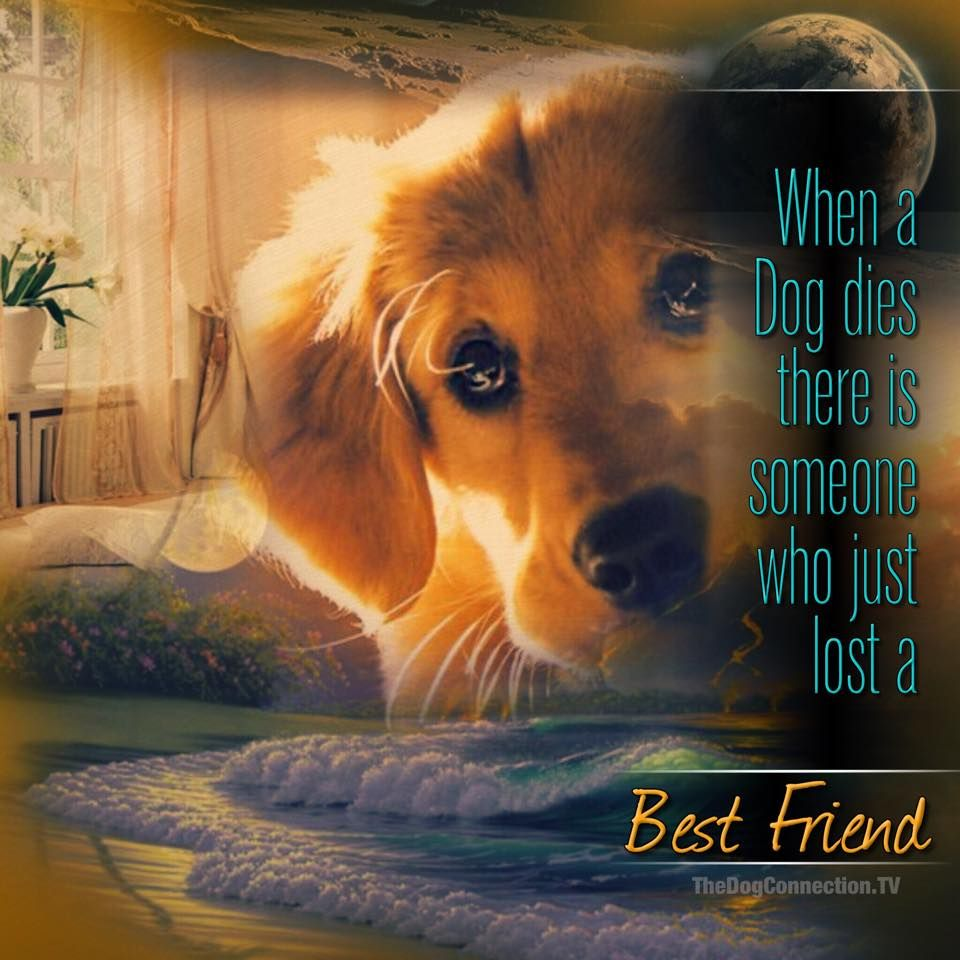 When A Dog Dies There Is Someone Who Just Lost A Best Friend Dogs Miss My Dog Pet Remembrance