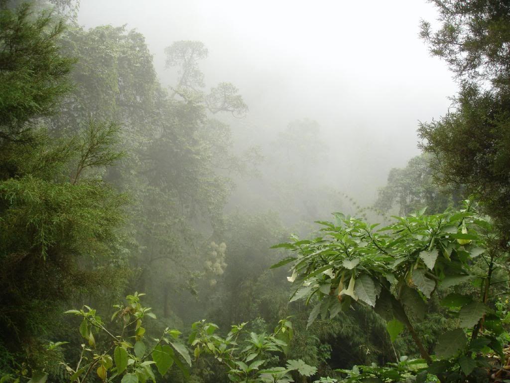 Jungle Foliage Jungle Foliage Photo By Deepwater