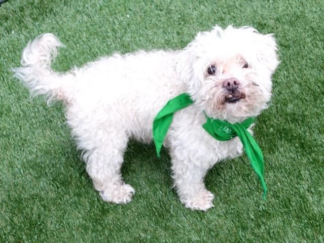 Returned After 3 Days Super Urgent Romio A1107373 Male White