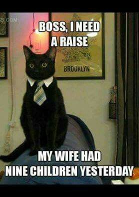 Funny Animal Pictures Of The Day Pics Funny Pinterest - 18 hilarious comics that are all too true for cat owners