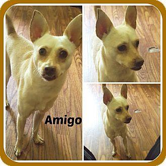 Pin By Debra Rainey On Arkansas Pets For Adoption Small Dog