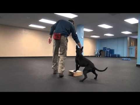 Focused Heel Foundation Work Tyler Muto Dogmanship Youtube