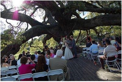 A Wedding Taking Place At The Angel Oak Tree In South Carolina Point Click Enjoy