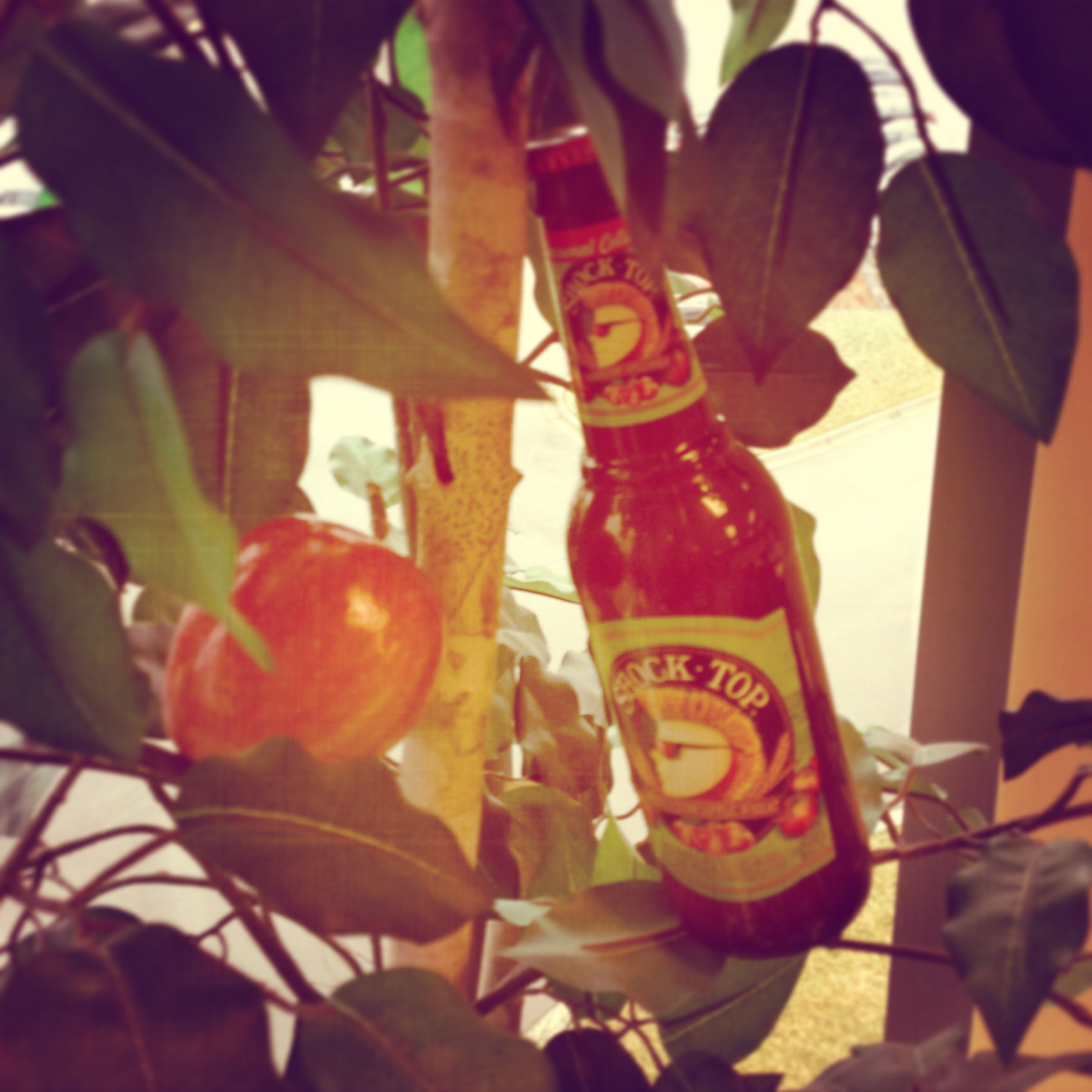 Looks Like The Apple Doesn T Fall Far From The Tree After All Shocktop Beerlovesyou Bring It On Newyear Beer