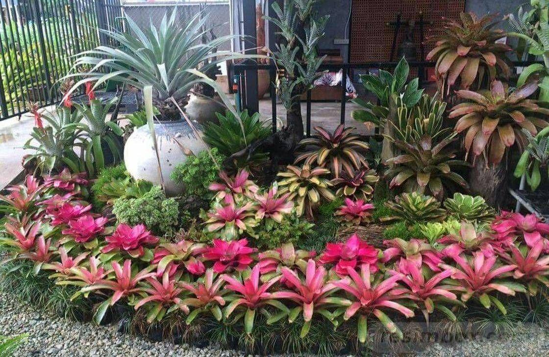 17 Exquisite Tropical Garden Ideas Queensland, #Exquisite #Garden