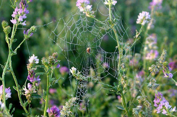 Spiderweb2