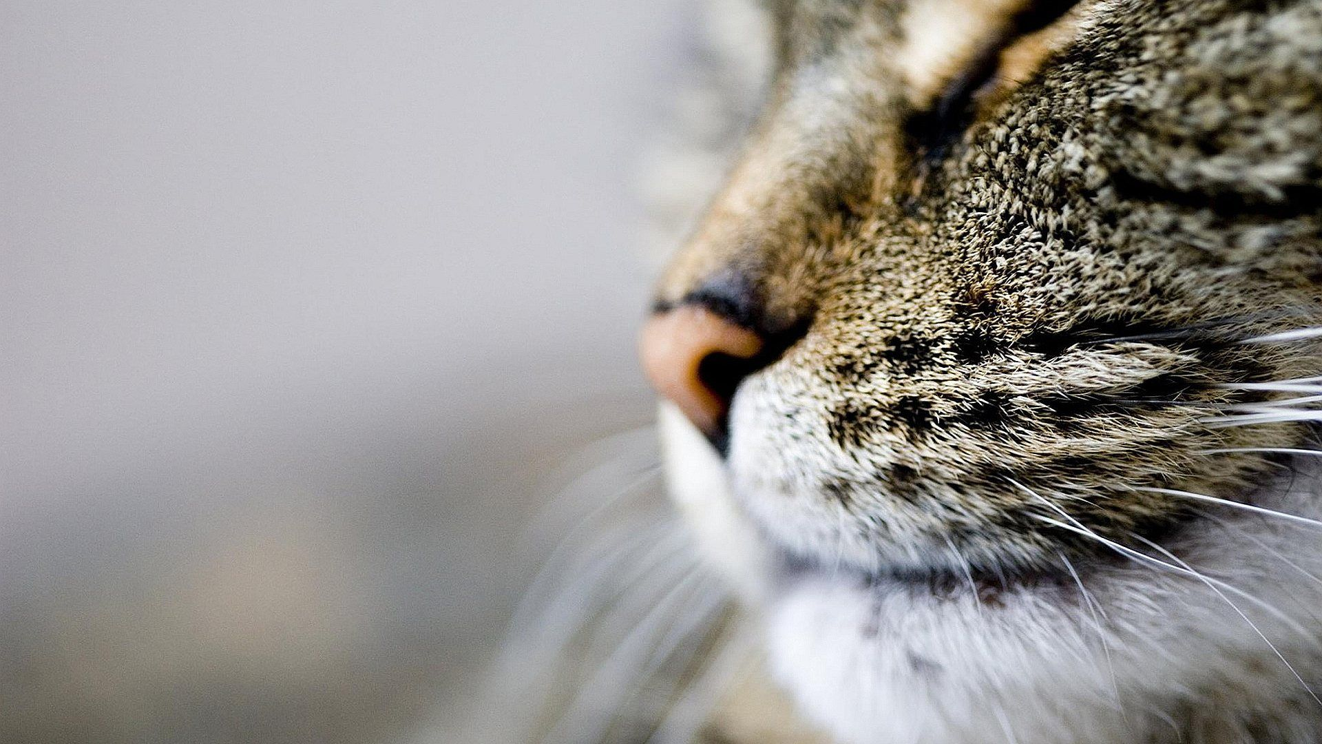 Do Cat Whiskers Grow Back? Cat nose, Cat background, Cat