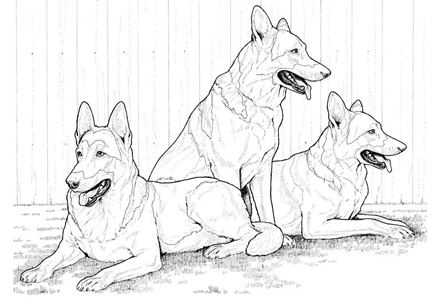 siberian husky coloring page aaa art watercolors pinterest