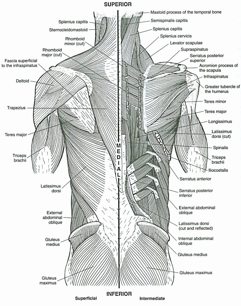 Gray's Anatomy Coloring Book Unique Pages Coloring 58
