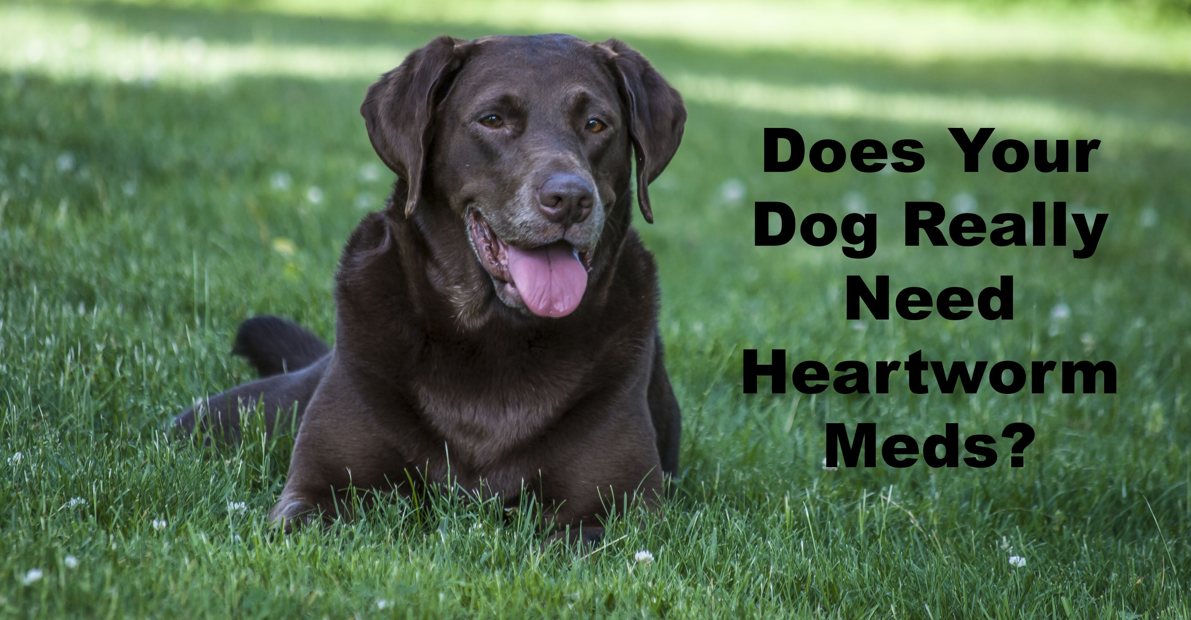 Heartworm Medication Part 1 Truths, Omissions and Profits