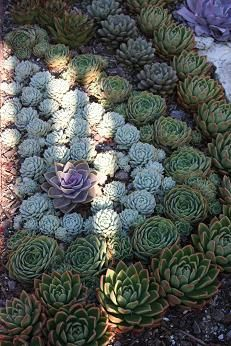 GREAT SUCCULENT RESOURCE & SITE