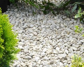 White Limestone Chippings 10mm Chippings Decorative Aggregates Aggregateshop Com Buy Gravel Slates Aggrega White Gravel Gravel Garden Tropical Garden
