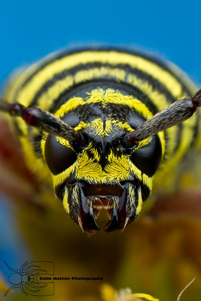 Wasp Up Close! Call A1 Bee Specialists in Bloomfield Hills ...