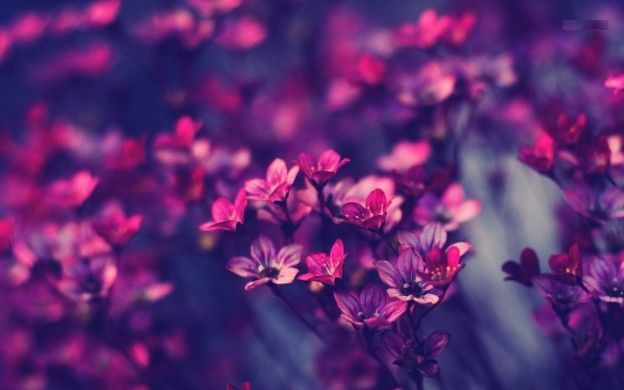Beautiful Violet Flowers HD Wallpapers, Free Download Violet