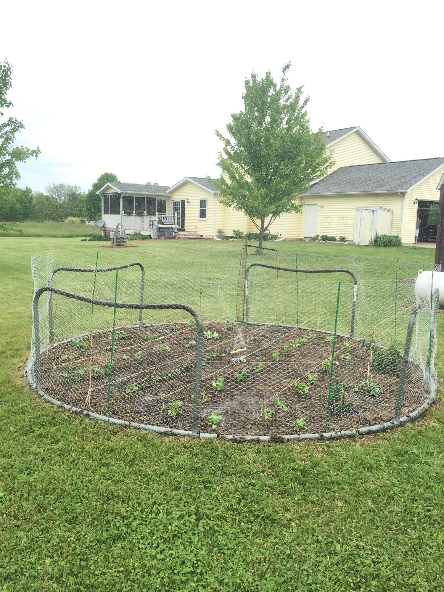 What To Do With Your Old Trampoline | Gardening | Pinterest ...