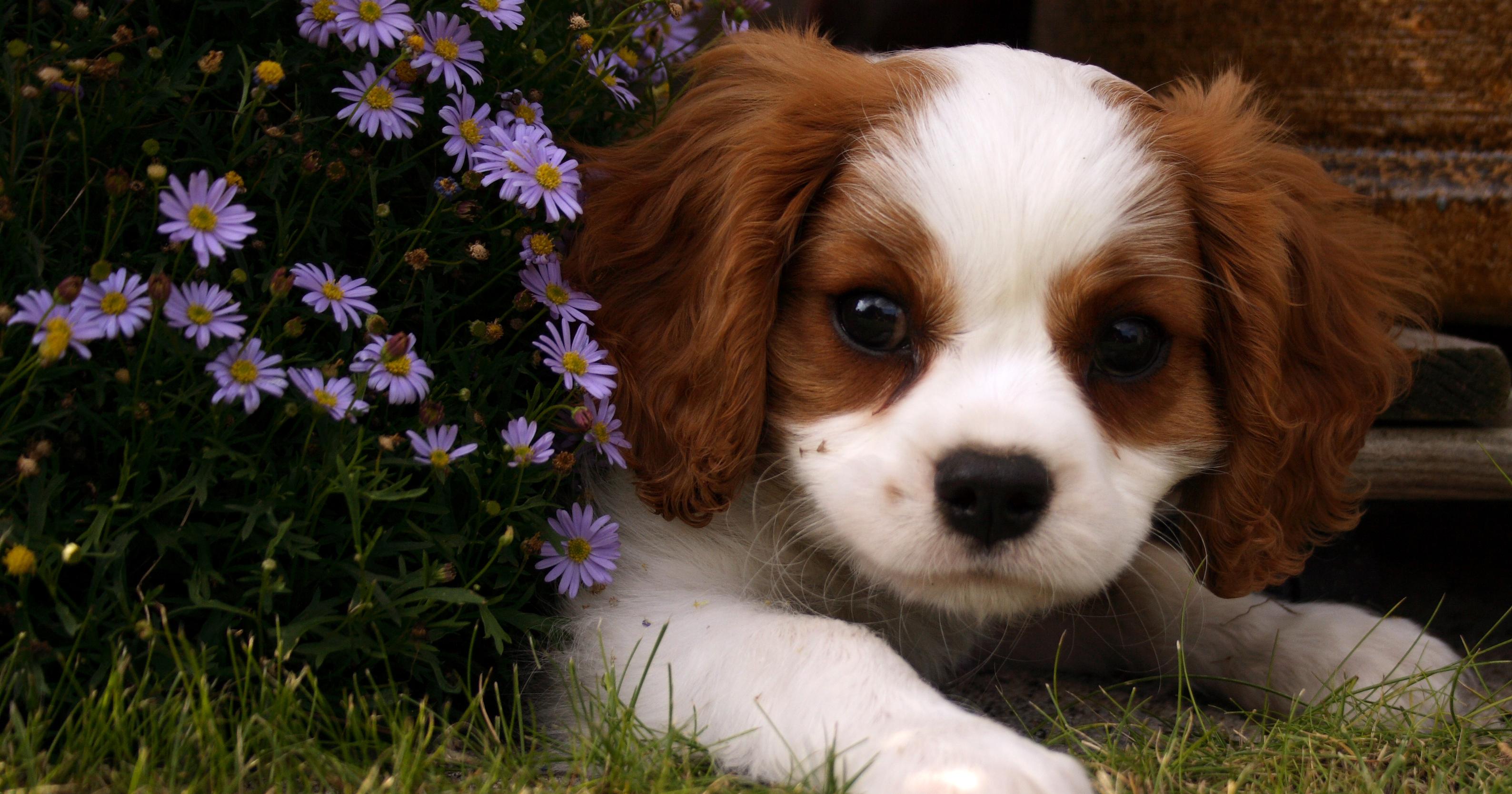 The Golden Paste for Dogs Starter Kit