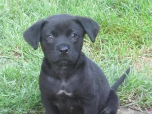 Adopt Demi Adopted On Petfinder Lab Mix Puppies Labrador Retriever Dog Labrador Retriever