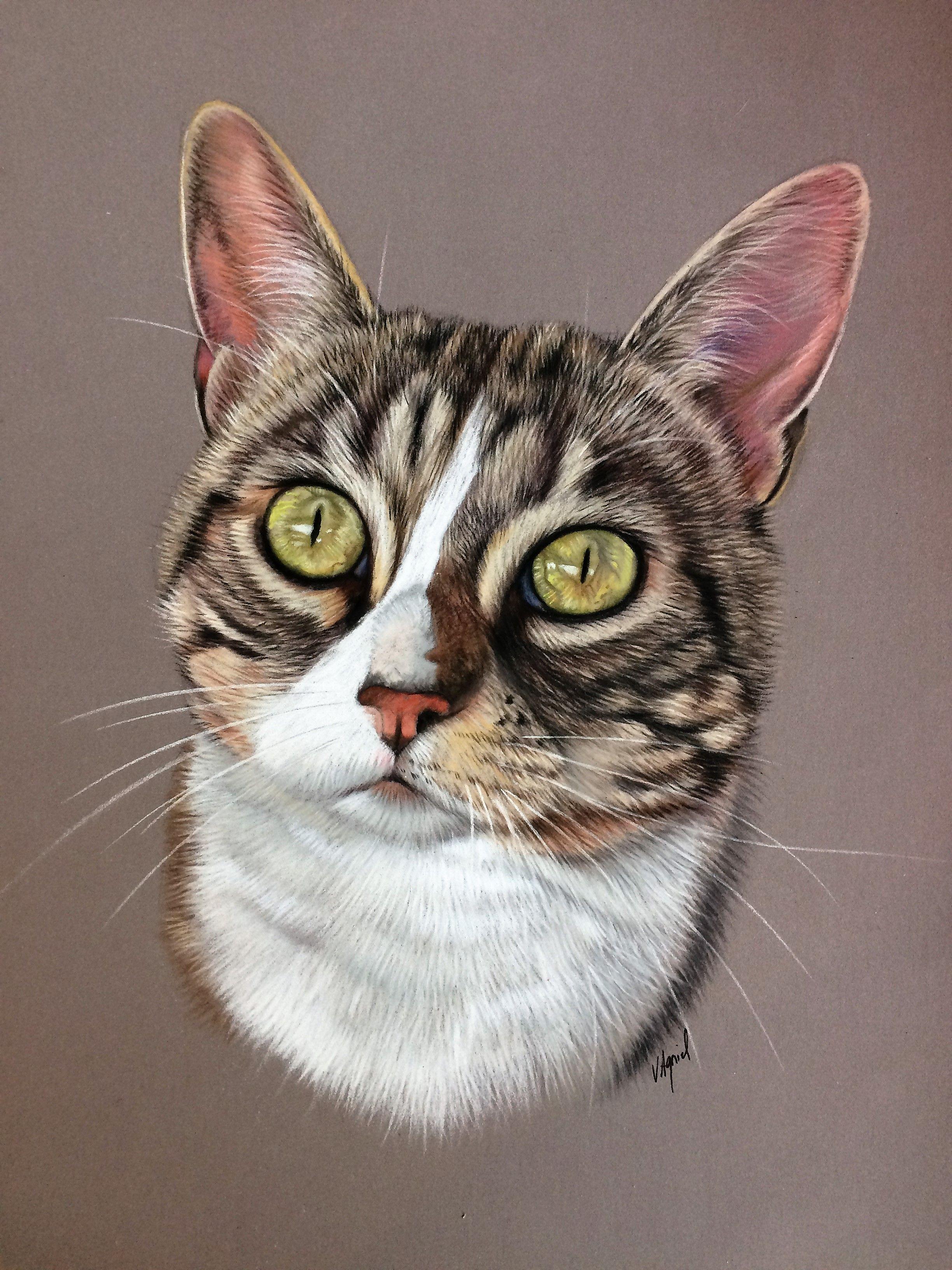 Portrait de chat au pastel, aux crayons pastels en 2020   Dessin chat, Peinture chat et Croquis ...