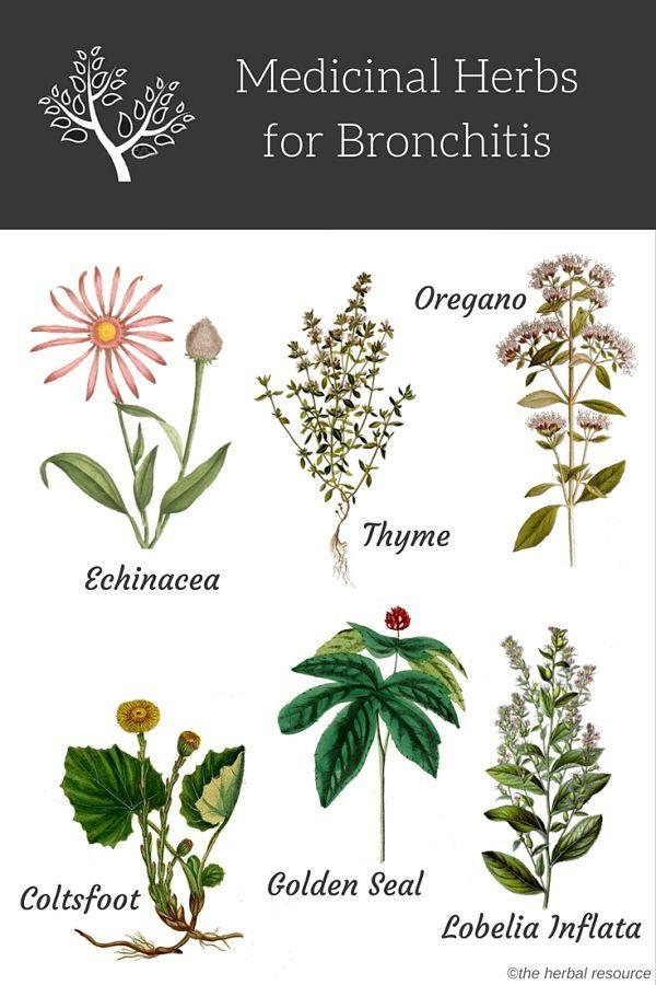 Bronchitis Herbs Botánica Pinterest Medicina Medicina Natural