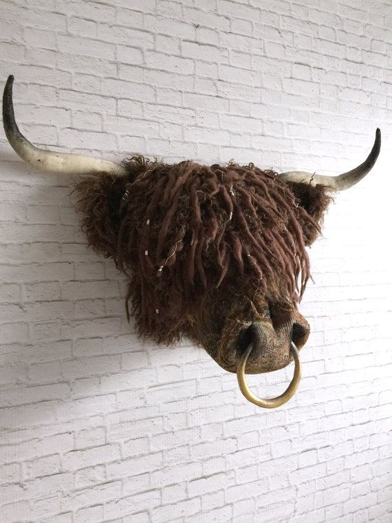 Angus Faux Taxidermy Highland Coo Faux Taxidermy Wall Art In 2020 Faux Taxidermy Taxidermy Animal Heads On Wall