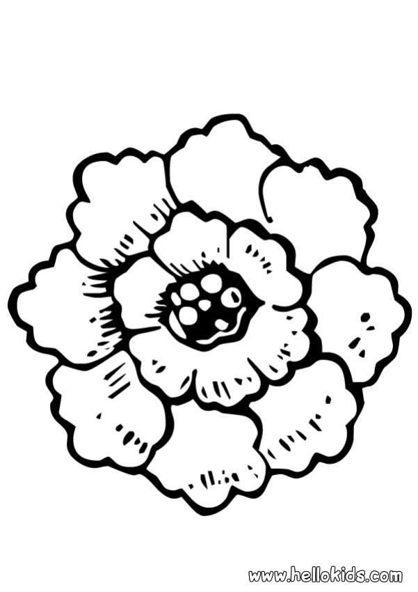Peony Coloring Page Perfect Coloring Sheet For Kids More Content