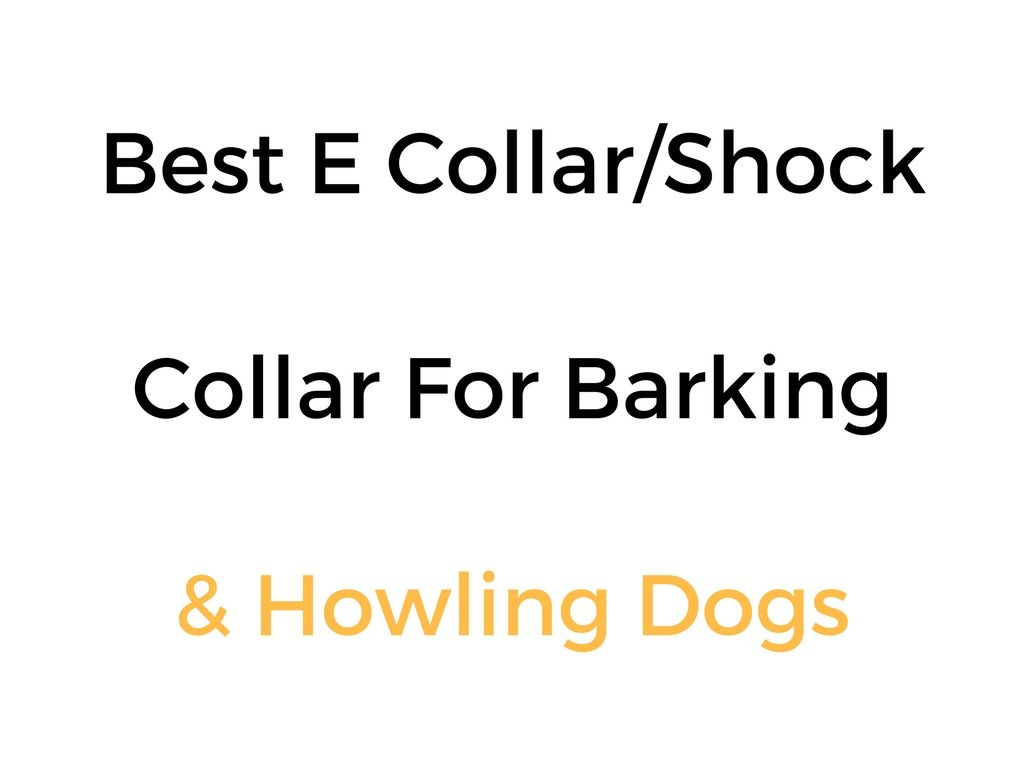 Best E Collar Amp Remote Dog Training Collar For Barking Or
