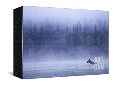 Moose Swimming in Bowron Lake Provincial Park, British Columbia, Canada. Photographic Print by Chris Harris at Art.com