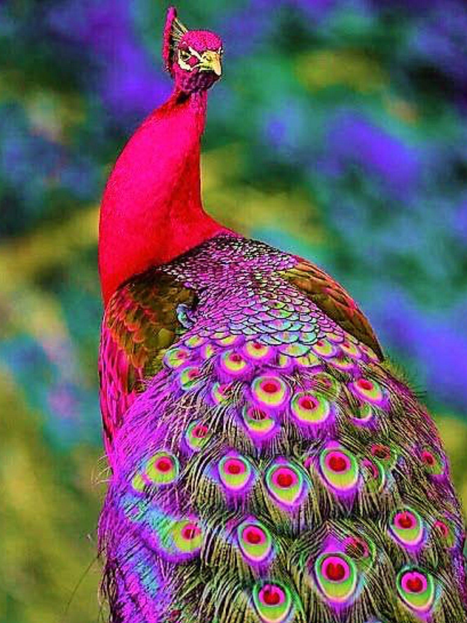 Pin by NADIA 👑 KARAM on ANIMAL♡KINGDOM Colorful birds