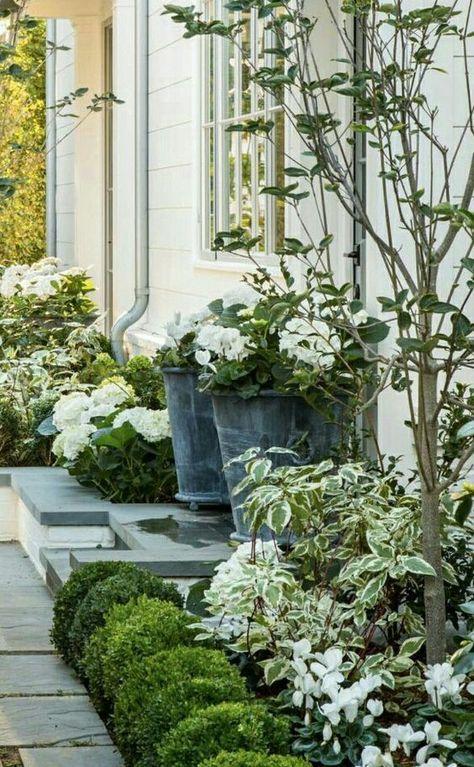 white flowers weigela and boxwood