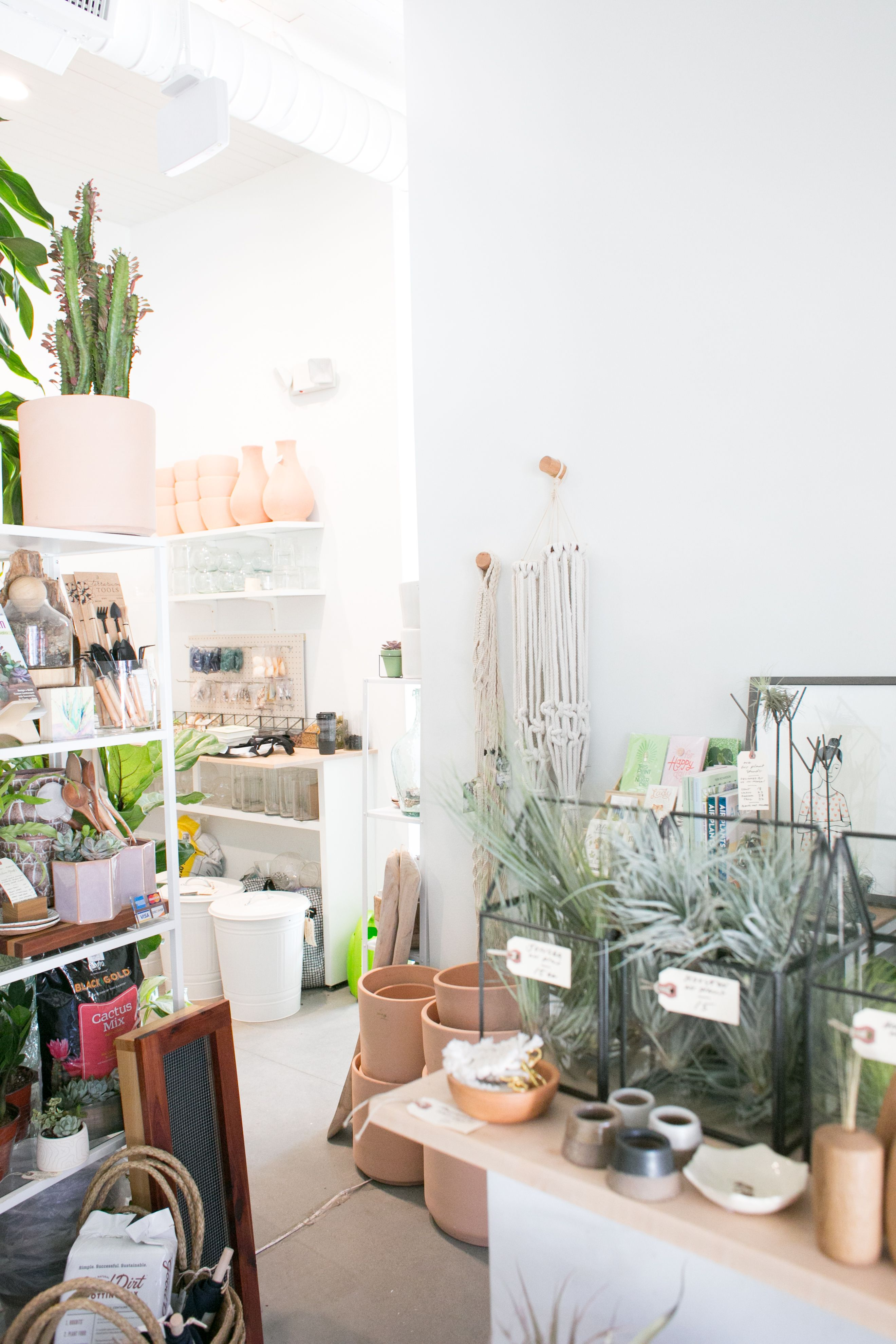 The Zen Succulent - Plant Shop Corner