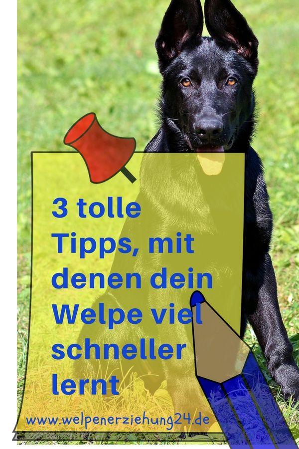 3 Tipps Fur Schnelle Lernerfolge Beim Welpen Welpen Hunde Welpen Erziehung Welpen Erziehen