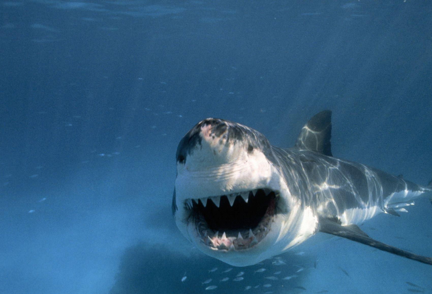 расскажем покажем, не дразни акул картинки женщина счастлива, что