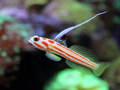 Featured Fish On Sale This Week Saltwater Aquarium Fish Saltwater Fish Tanks Sea Fish